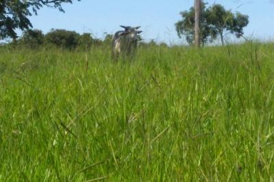 Fazenda com 1.226 Ha. em Bonito